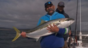 Video: How to catch kingfish